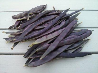 Glorious Purple Beans